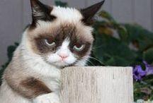 Grumpy Cat / ............feel like this sometimes