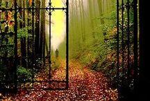 Enchanted*