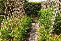 Záhrada bio