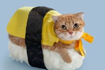 Amazing Cat Costumes / Check out these adorable costumes for your cats!