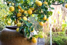 GARDEN & PATIO / Garden designs with patios that I like, along with great ideas for the yard. / by Melinda Hase