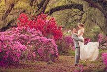 wedding photo ideas / wedding photography and photo ideas / by Hailey Kimble