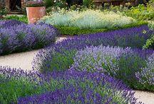 Huerta y jardín