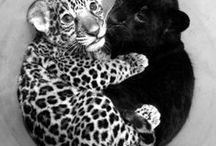 My Fav Animals / This is a collection of photos of the animals that I like