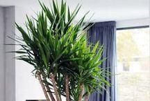 Planten / planten   groen   interieurbeplanting   hydrocultuur   interieur   design   woninginrichting   kantoor  