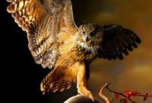 Birds. Птицы