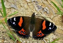 (1) Papillons / Les beaux papillons / by Arlette Bedel