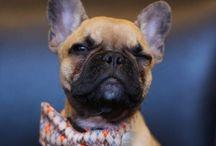 Puppy power! / by Cherrios24