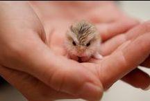 Owls / Owl I want!!!