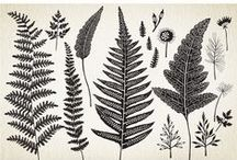 Fonts and Design Elements / Things to buy for my design projects / by Linda Shirar