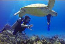Polinesia francese - da 20 anni