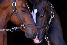 Horses / I entered the horsey world when I was 6, they are the most beautiful animals on the planet :)