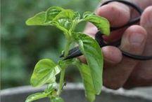 GREEN gardening&planting