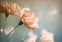Art / by Mint Peach Boutique