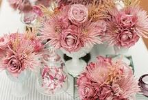 Kwiaty: chryzantemy