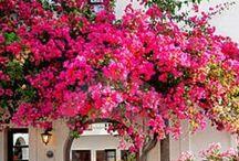 Prettier in Pink / by Fashion Cognoscente
