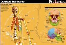 Español de la medicina y la salud / Material de apoyo para estudiantes de español en el sector biosanitario.