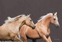 Horses / by Teresa