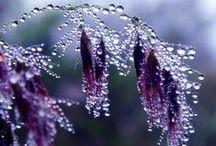 Dauw druppels  en het effect-   Dew  drops reflection / Dew Drops / by Polly Weitering
