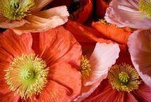 fiori..frutti..foglie e farfalle