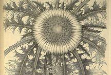 Biologi : Blommor / Blandade botaniska illustrationer ...