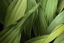 - Plant -