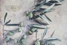 ~Olives & Capers~ / ~Please pin politely. Thank you~ / by A Hans