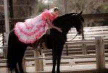 Shows / Andaulsian Horse Show photos