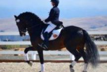 Horses for Sale / Andalusian Horses for Sale