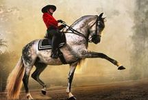 Events / Horse Shows, Equestrian Events,