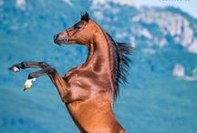 hepat!!!!!!!!!!!!!!!!!!!!!!! / horse and horse