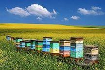 Bee hive / Bienenbeute