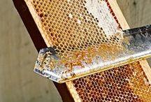 Honey comb & extracting / Bienenwaben und Honiggewinnung