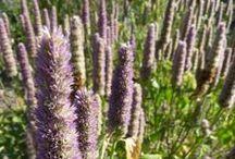 Bee pasture / Bienenweide