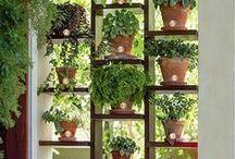 bukiety-wiązanki-rośliny