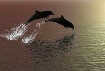 Ocean - dolphins