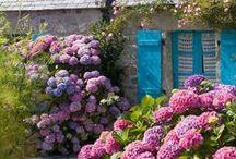 the garden / looks i love