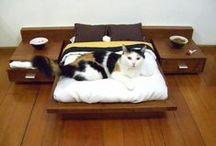Cat beds / The best cat beds for your feline friends.
