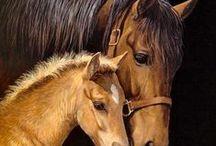 Horses / Photography of horses