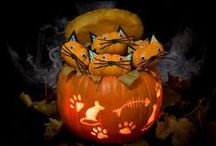 Our favourite pumpkin entries / These are our favourite entries to our creative carve the Pumpkin competition.