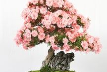 ✿ Bonsai Trees ✿