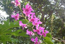 Beautiful Flowers / My beautiful dying orchids awaken by my poem.