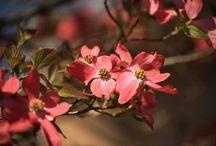 春の花 / 2014/04/ 春