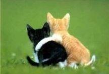 chat de tess / photos animaux