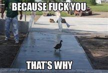 HIH / Just.laugh.
