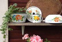 Pikkupuoti Aino, my own garden
