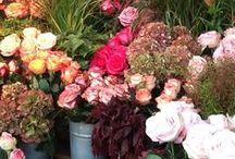 Roses and other flowers / A big variety of flowers is growing on the property of Casa Spertaglia