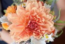 Floral  / Ideas