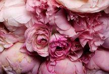 Wallpaper iphone flowers