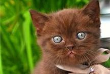 Kittens and other cute animals / Cute animals